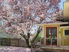 i love my tree  來自 my confetti garden - DECOmyplace 居家誌