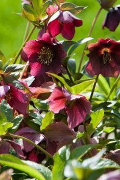 3 Plantes A Mettre Au Jardin Dans Une Ambiance Seche Jardins