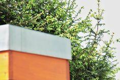 Smrkový sirup na rýmu a kašel - vytvořte si vlastní | Přímo od Včelařky Planter Pots, Syrup