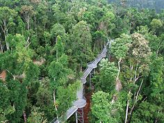 Mamu Rainforest Canopy Walkway Australia & best picture daintree rainforest | The Voyager - 4 Day Tropical ...