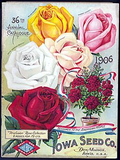 Catalog Information    Company Name:  Iowa Seed Co.    Catalog Title:  36th Annual Catalogue (1906)  Publication Information:  Des Moines, IO  United States  Category(ies) of Cover Art:  Roses