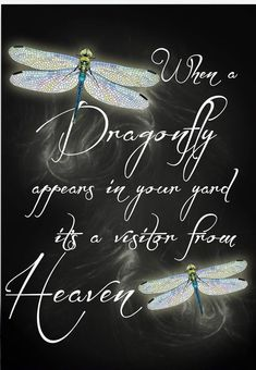 Mom loved dragonflies so much. It all makes sense now.
