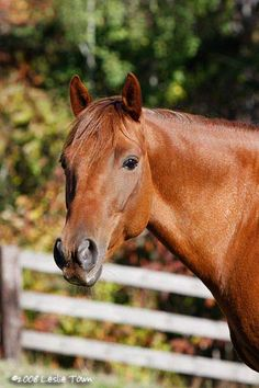 Sorrel Quarter horse gelding <3