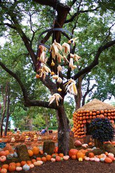 1000 images about dallas arboretum on pinterest dallas - Botanic gardens pumpkin festival ...