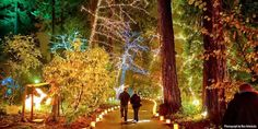 Here's the Best 13 Places in Oregon to See Christmas Lights Best Christmas Light Displays, Best Christmas Lights, Hanging Christmas Lights, Holiday Lights, Christmas Mantles, Christmas Ships, Christmas Town, Victorian Christmas, Christmas Christmas