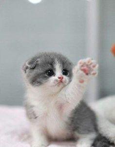 "Hi "")  ♡♡♡"