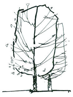 A quick note on how to sketch trees in elevation | ARCHILIBS