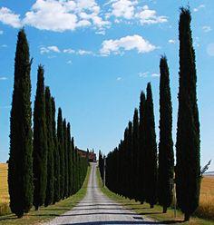55 Fantastiche Immagini Su Strade Viali Alberati Roads Toscana