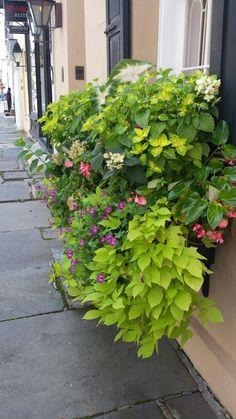 Charleston SC.  2015 Window Box Flowers, Window Boxes, Charleston Sc, Garden, Plants, Garten, Lawn And Garden, Charleston, Gardens