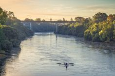 Early morning rowers on the Waikato River New Zealand