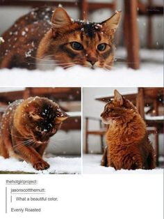 Cat Litter Full Of Caturday Memes - World& largest collection of cat memes and other animals Cute Funny Animals, Cute Baby Animals, Cute Cats, Funny Cats, I Love Cats, Crazy Cats, Beautiful Cats, Animals Beautiful, Beautiful Pictures