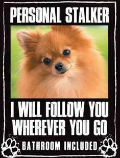 Pomeranian Red Dog Gift Sign Please dont Let the Dog Out sign with suction cup measures 5 x 7 in size
