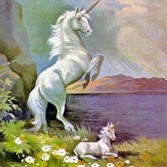 Fantasy images Unicorns wallpaper and background photos (16642339) Unicorn And Fairies, Unicorn Fantasy, Real Unicorn, Unicorn And Glitter, Unicorn Horse, Baby Unicorn, Unicorn Art, Magical Unicorn, Fantasy Art