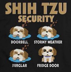 More About Playfull Shih Tzu Puppies Size Shitzu Puppies, Cute Puppies, Cute Dogs, Dogs And Puppies, Doggies, Bichon Frise, Puppys, Shih Tzu Hund, Pet Beds