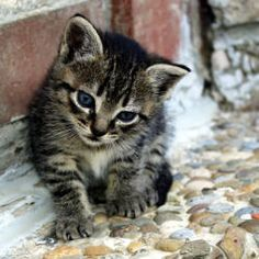 Tell the Canadian government to stop importing products containing cat and dog fur.