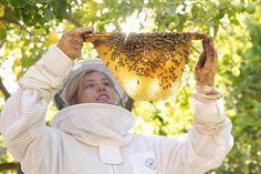 Bee, Honey, Beekeeping, Bees, Honey Bees