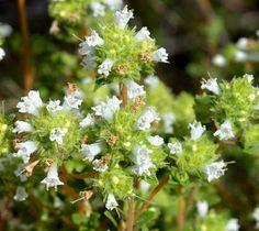 Plantas: Beleza e Diversidade