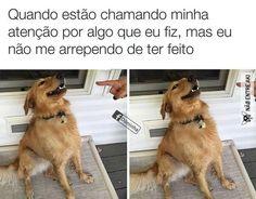 MEME DOG
