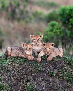 By beautiful-wildlife http://www.nature4picture.ml/2018/05/by-beautiful-wildlife_10.html