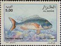 [Fish, type AKK]