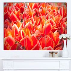 DESIGN ART Designart 'Tulip Flowers in the Keukenhof Park' Modern Floral Wall Artwork