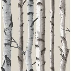 Birch Tree Wallpaper Natural Beige / Cream (FD31051)