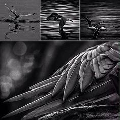 Admiro as aves que tem na arte do voo, a realização dos meus mais lindos sonhos... OBRAS FOTOGRÁFICAS DISPONÍVEIS EM BLOCO DE SKETCHUP ACESSÍVEL PELO LINK DO INSTAGRAM…