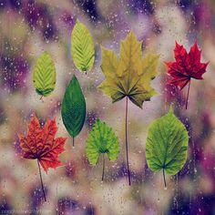 25 Best Leaves Images On Pinterest