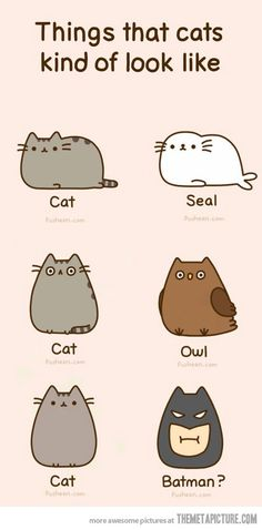 drawings of cute things | Things that cats kind of look like - The Meta Picture