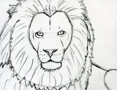 how to sketch a lion step 8