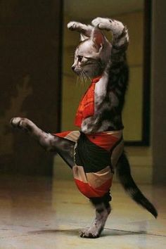 Japanese Photographer Captures Ninja Cats in Ameowzing Action Shots Cute Cats And Kittens, Cool Cats, Kittens Cutest, Cute Funny Animals, Funny Animal Pictures, Funny Cats, Ninja Cats, Image Chat, Dancing Cat