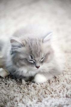 So ya I'm a loser who is obsessed with cats, but I want one like this when I move out! My children better not have allergies because I will never not have a cat! don't judge me..