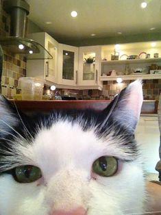 cat-selfshot-12.jpg