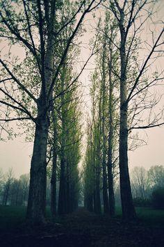 Más tamaños | We are 90 years old trees that why we are a lot taller than u. | Flickr: ¡Intercambio de fotos!