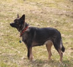 our sweet girl Saaga. Sweet Girls, Dogs, Animals, Animales, Animaux, Cute Girls, Doggies, Animais, Dog