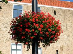 hanging planter for city lanterns Jiflor Atech Flower Tower, Hanging Planters, Flower Pots, Lanterns, Towers, City, Beautiful, Rainbow Colours, Planting
