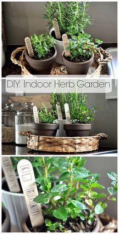 DIY: Indoor Herb Garden. So simple and cheap! www.littleglassjar.com #herbs #herbgarden #indoorherbgarden