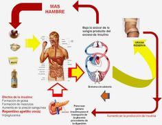 Diabetes Causas efectos y como controlarla: La obesidad y los cambios metabolicos que produce ...