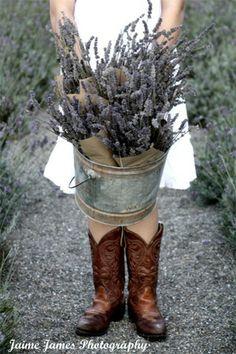 lavender festival - Applegate Valley Lavender Farm