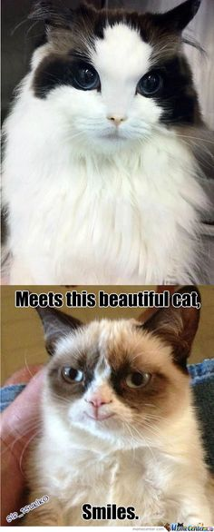tard the grumpy cat no | Tard The Grumpy Cat - Meme Center