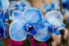 Image result for beautiful orchids pictures
