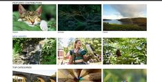 Best free stock photo sites list, you can use for your personal or commercial purpose. Free stock photo websites are a useful list to easily find free stock image Stock Photo Websites, 100 Logo, Royalty Free Stock Photos, Blog, Image, Blogging