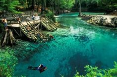 How did I not know of this place when I lived there? Florida Spring Holes, Florida