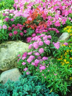 Candytuft: Perrenial & annual varieties. Full sun & well drained soil. 1 foot tall & two feet wide  deer resistant  gardening