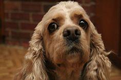 The 37 Smartest Dog Breeds