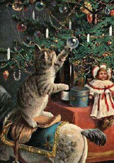 Curious kitty!    Aline ♥