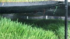 Guia: Producción Intensiva de Forraje Verde : .: Hydro Environment .: Especie Animal, Hydroponics, Plants, Build A Greenhouse, Pest Control, Green Leaves, Irrigation, Growing Up, Planters