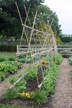 Bamboo stakes secured with twine in a teepee-like structure are perfect for creating trellises to support pole beans and peas, which are both light, f… - Alles über den Garten Bean Trellis, Bamboo Trellis, Garden Trellis, Bamboo Poles, Small Vegetable Gardens, Veg Garden, Trellis Design, Trellis Ideas, Gardens
