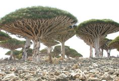 "Isolated Island with Strange Plant Life is ""The Most Alien-Looking Place on…"
