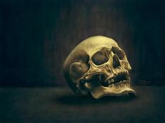 Skull study Photoshop CS6